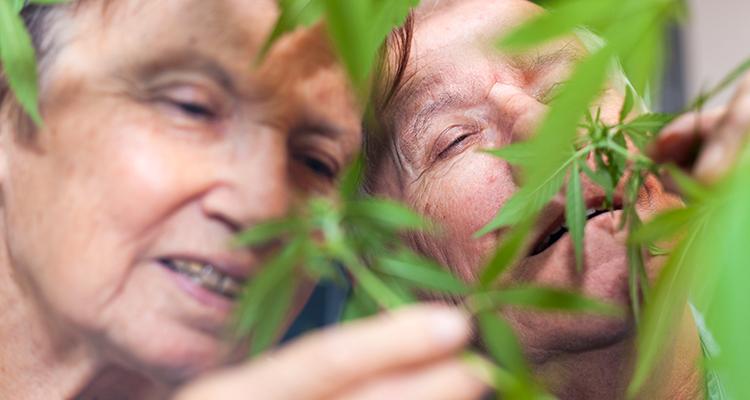 Immer mehr Senioren konsumieren Cannabis
