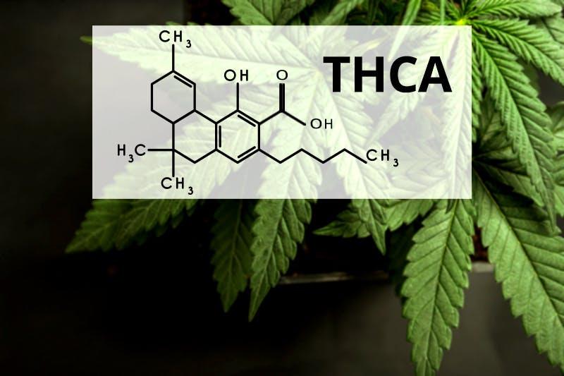 Was ist THCA?