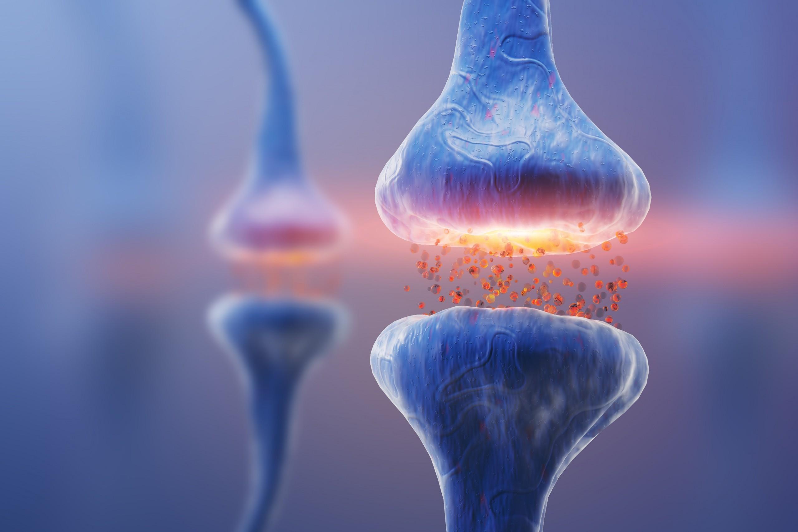 Die Grundlagen der Neurotransmitter