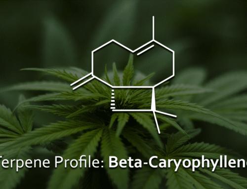 Terpen-Profil Beta-Caryophyllen